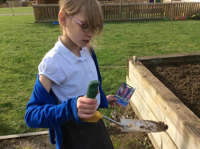 Preparing the soil for seeds