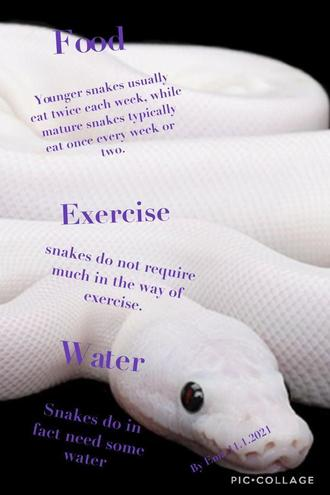 Fact sheet about snakes