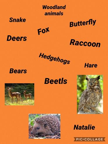A mind map of many woodland animals