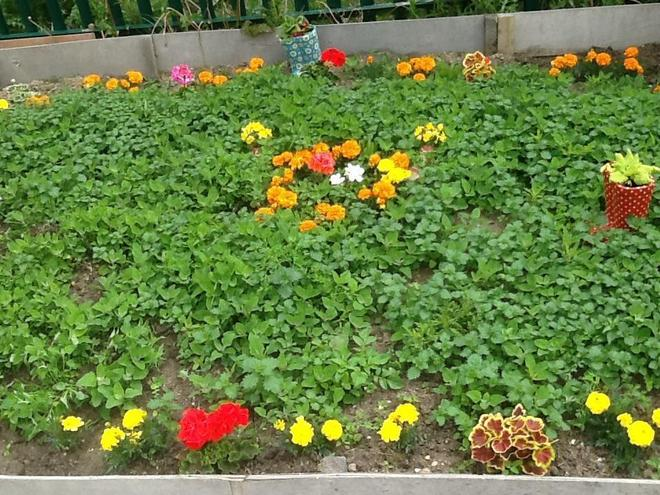 Sensory plants