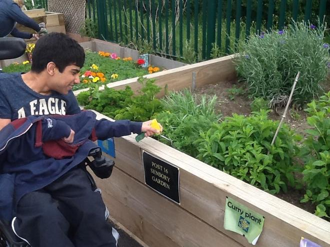 Working in the sensory garden