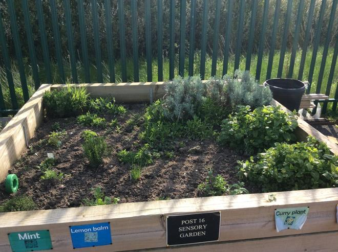 Our herbs