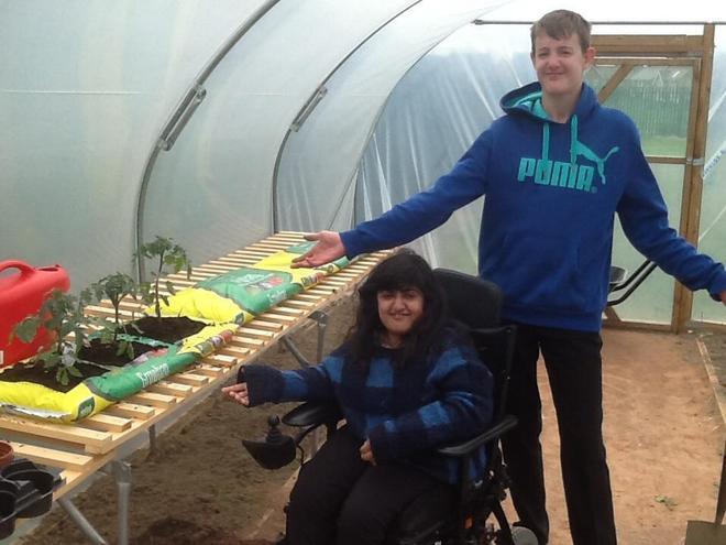 Maintaining healthy tomato plants