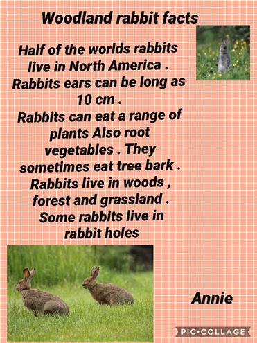 A fact sheet about a wild rabbit