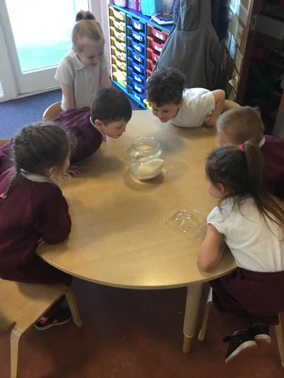 Observing a 'dinosaur egg'.