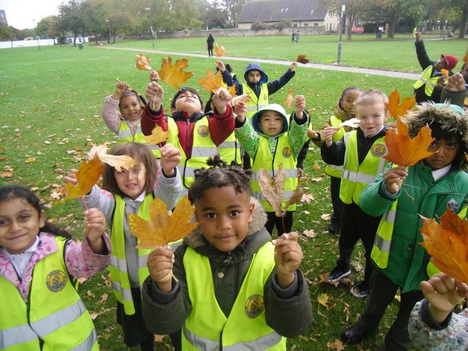 """We also looked at Autumn features in the park. How have these leaves changed from the Summer leaves?"""