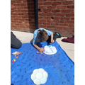 Painting the  planter