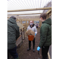 The students adding straw for the nest box.
