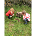 Outside classroom - finding animals under logs.