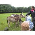 ! year old donkeys.