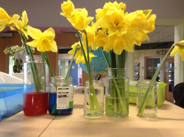 In Science- we watched our stems absorb dye
