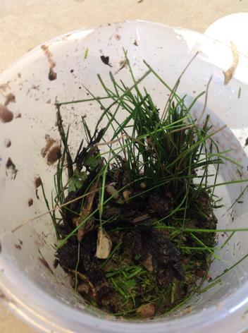 The soil, grass, gravel, sand, bark and water.