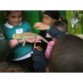 or an iguana.