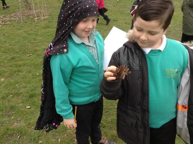Our pine cone detectives!