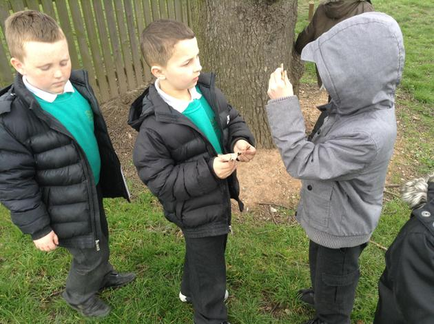 Finding clues...pine cones!
