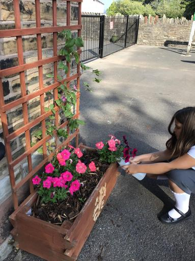 Caring for the environment in Eco club.