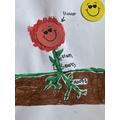 E has labelled a plant