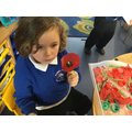 Make your own poppy,