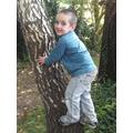Climbing a tree.