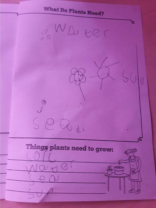 Sarjana wrote about things that a sunflower needs.