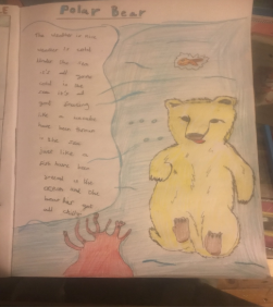 Lylia's fantastic work on polar bears