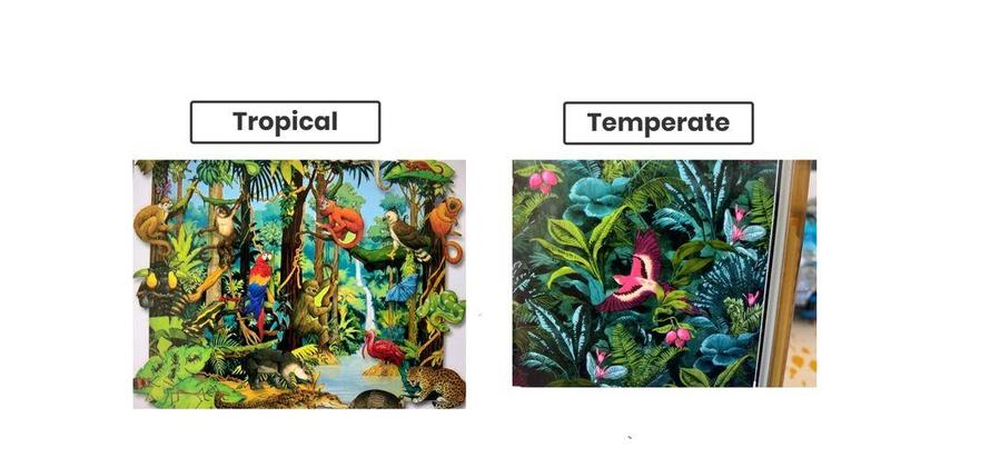 Beau's Rainforests