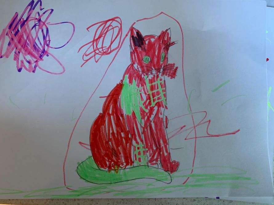 Well done Maya! My cat's favourite colour is red.