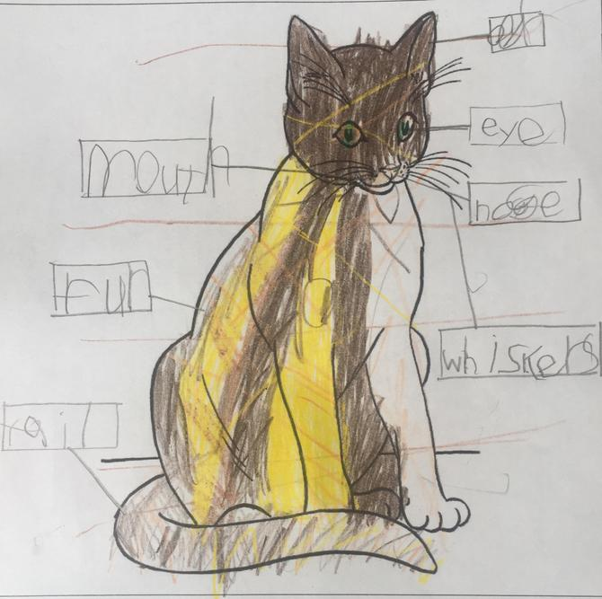 Well done Fyfe, you have labelled your cat.
