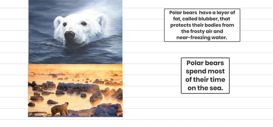 Polar Bears by Rijja.