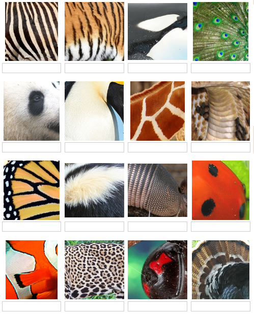 Name these animals from their close-ups