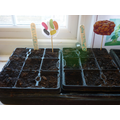 We planted Jelly Beans and Baked Beans