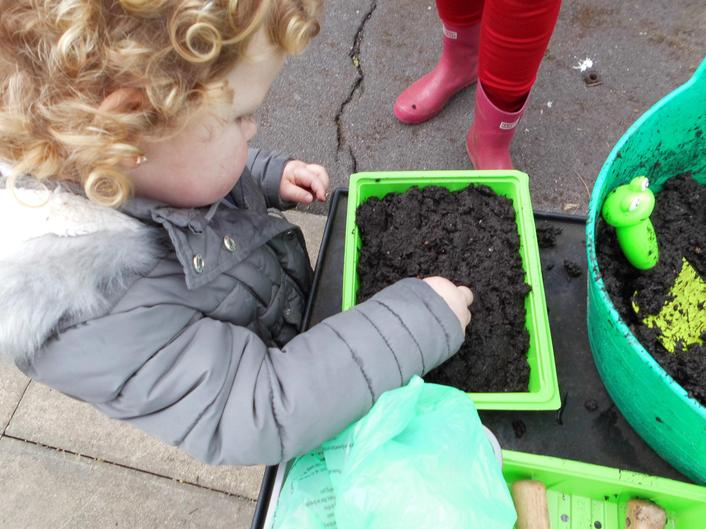 PLANTING GIANT SUNFLOWER SEEDS