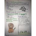 Lexie's lovely grassland habitat report :)