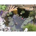 Nice pond Ed