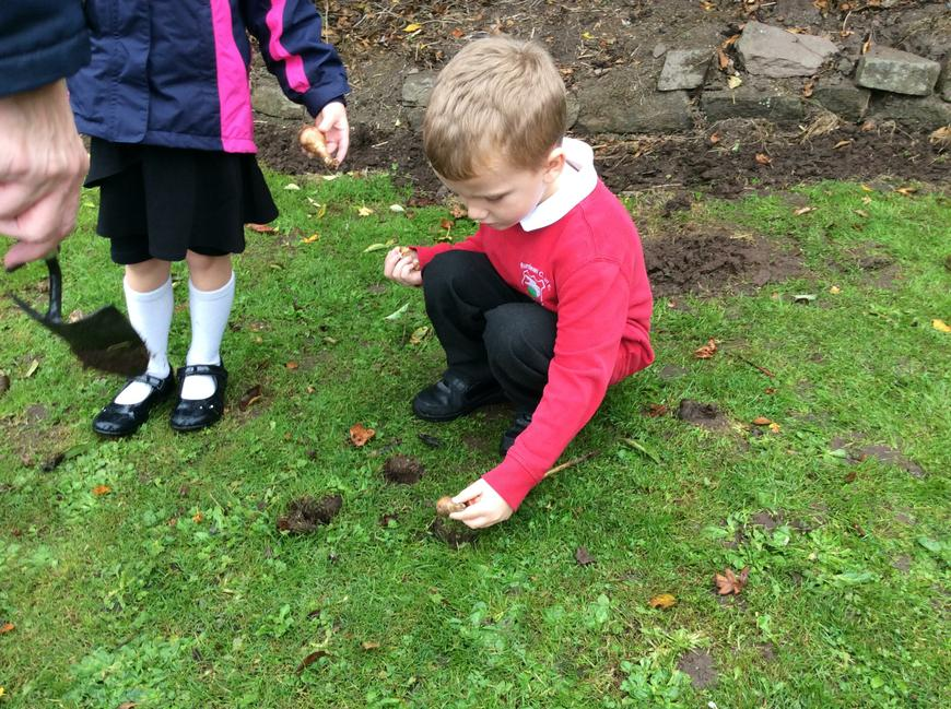 Whole school and community bulb planting day