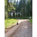 Freddie's forest adventures