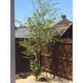 Izzy's tree