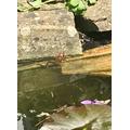 Ed's frog