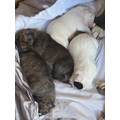 Lily Mai's new puppies are keeping her busy