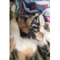 Marnie is going to be busy with these cute kittens