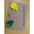 We dissected roses to see the parts of a plant and label its functions.
