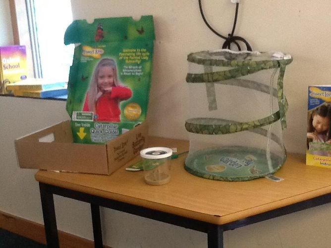 We got caterpillars this week and are going to see how they grow.