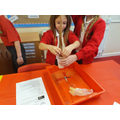Making a model digestive system