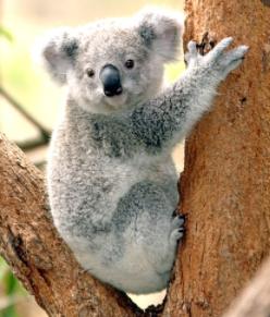 5 Koala : Mrs Lawrence & Mrs Martin