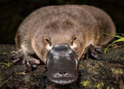 5 Platypus : Mrs West & Mrs Claridge