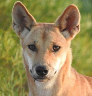 5 Dingo : Miss Morgan