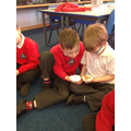 Seed Investigation - What do seeds need to grow?