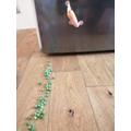 Trail of peas in Diane's kitchen!