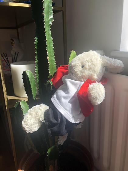 Reggie climbing a cactus!