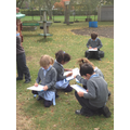 Exploring the trees in our school grounds